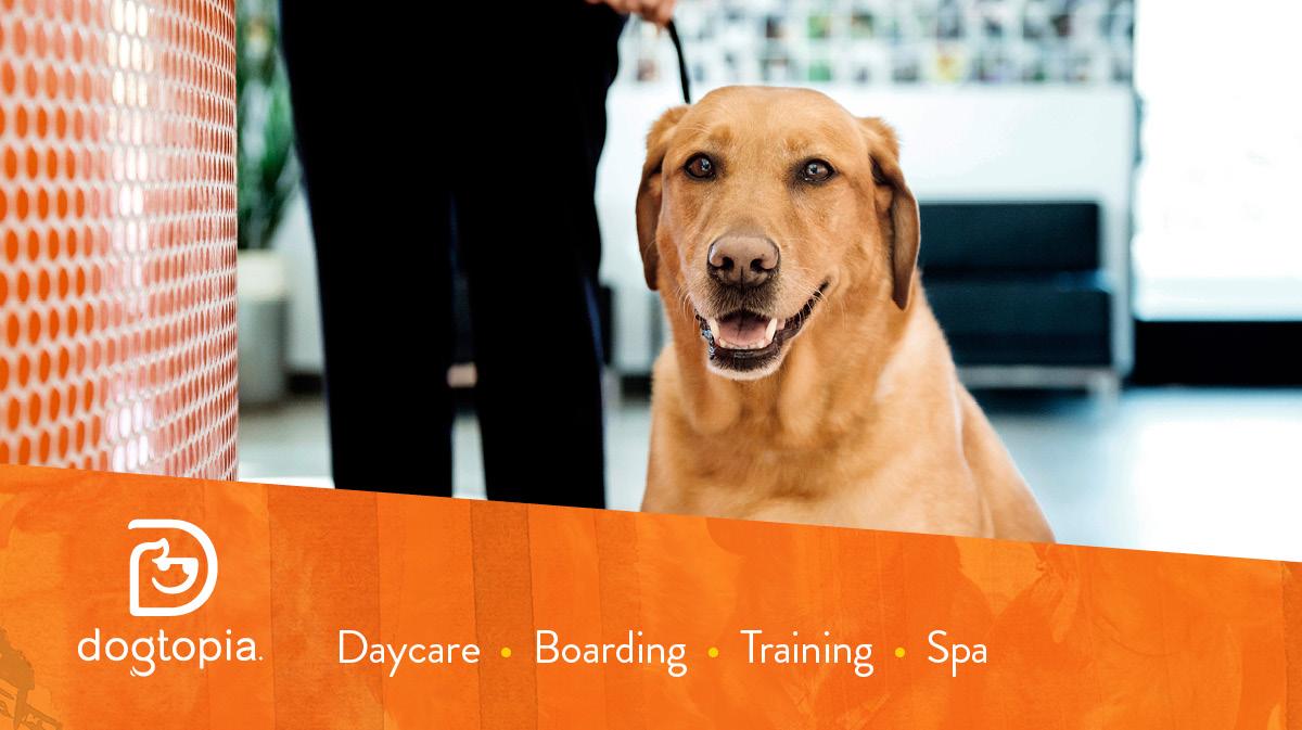 Dogtopia Branding Agency Blind Society